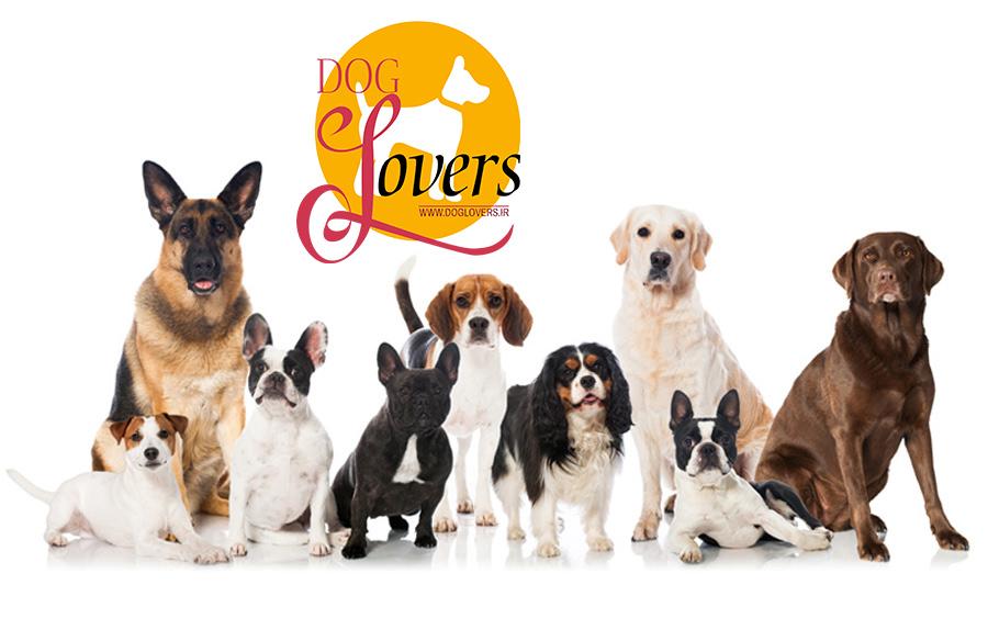 واردات تخصصی سگ از کشورهای مختلف