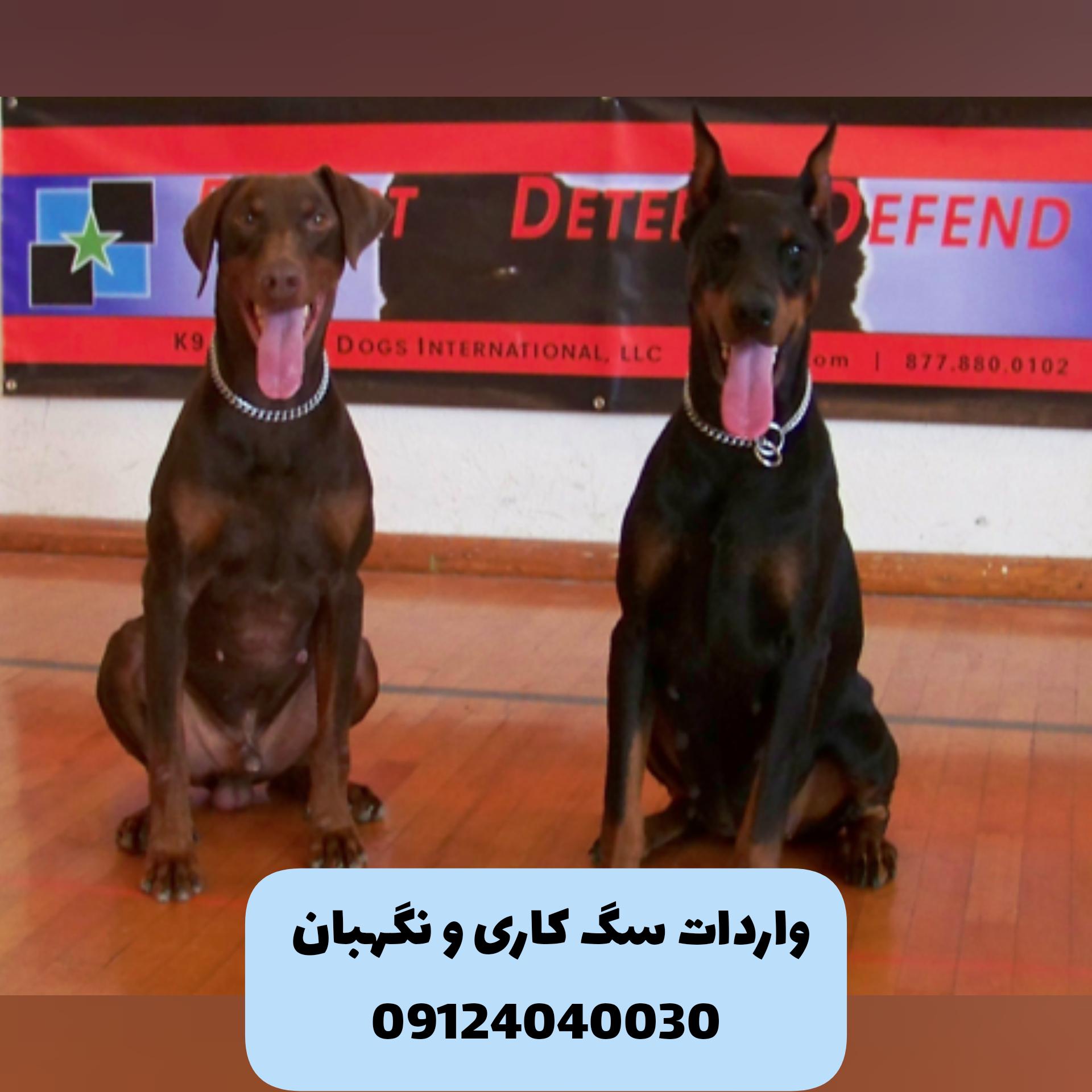 واردات سگ نگهبان از کشورهای اروپایی