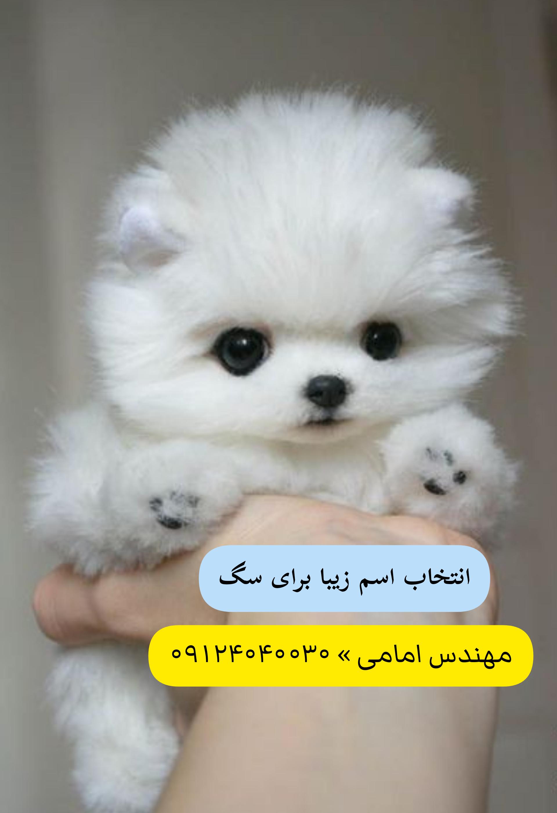 اسم سگ